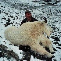 Leonard Wolter - BC Mountain Goat