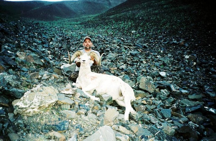 Leonard Wolter - Dall Sheep